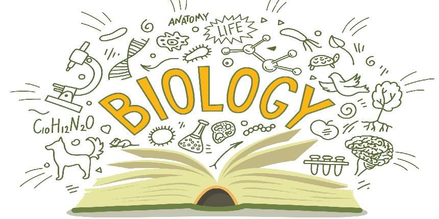 NCERT Books for Class 12 Biology
