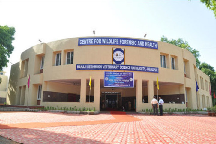 https://cache.careers360.mobi/media/colleges/social-media/media-gallery/997/2019/7/4/Department view of Nanaji Deshmukh Veterinary Science University Jabalpur_Campus-View.jpg