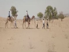 Rajasthan: Teachers Travel By Camel To Teach Students Lacking Mobile Networks In Rural Areas