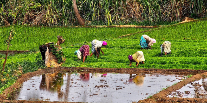 Top research institutes, DU crack rice genome to improve productivity