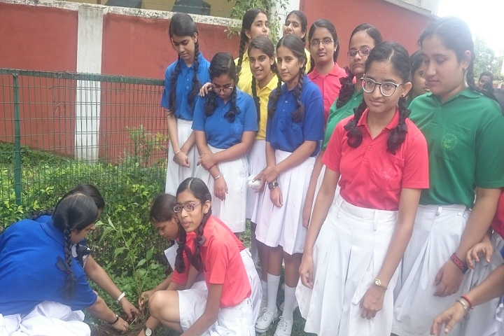 Christ Chruch Girls Senior Secondary School-Plantation