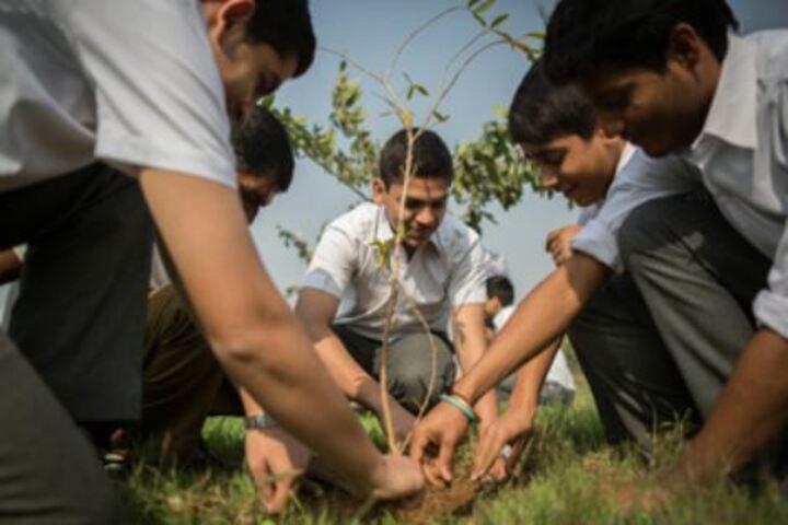 The Scindia School-Planting