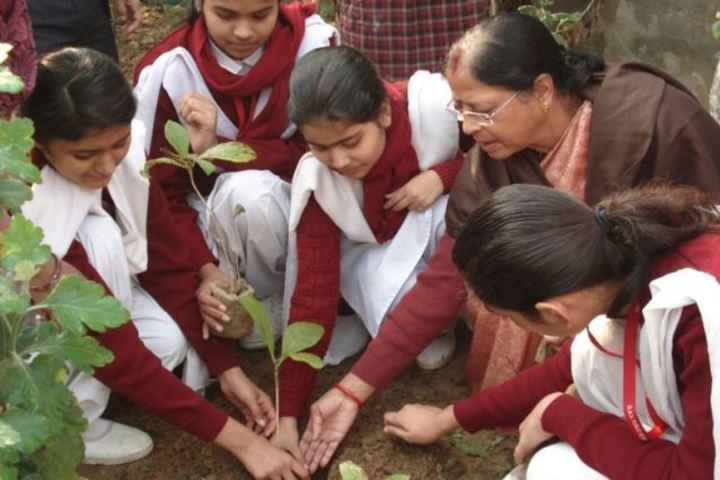 DAV Public School-Planting Tree