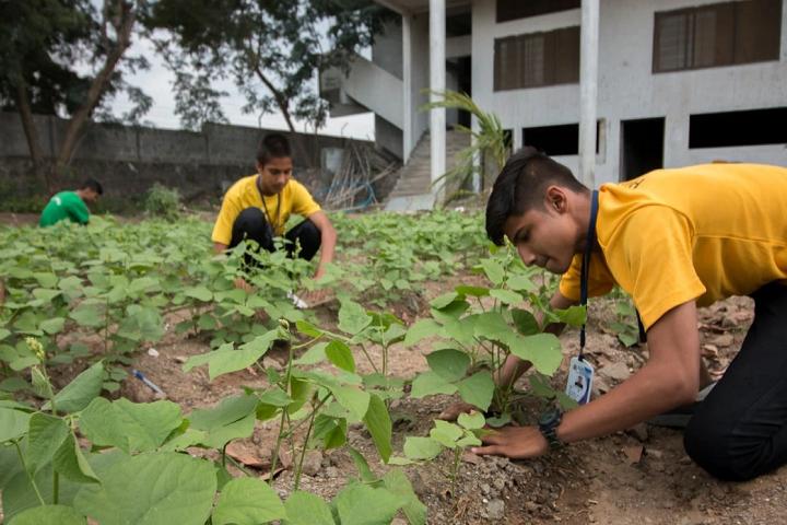 Shivneri School-Plantations