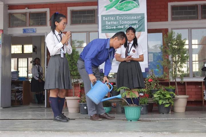 St Paul S Institute-Planting trees