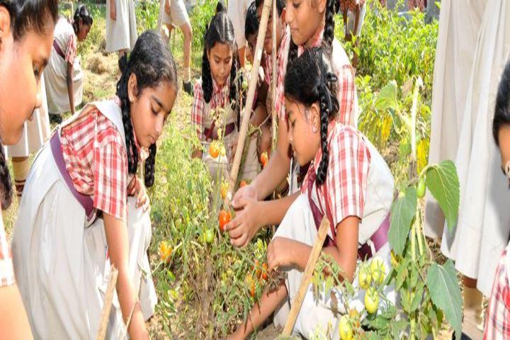 Abhyas The Global School-Indoor Gardening