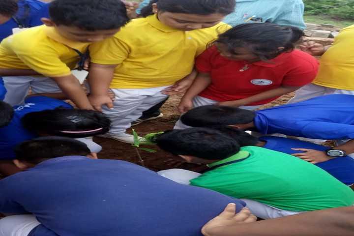 Mount Litera Zee School-Tree-Plantation
