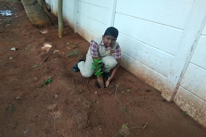Stansford International Higher Secondary School-Tree Plantation