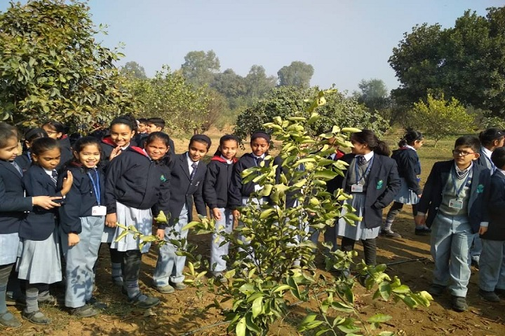Bal Bharati Public School-Others plantation