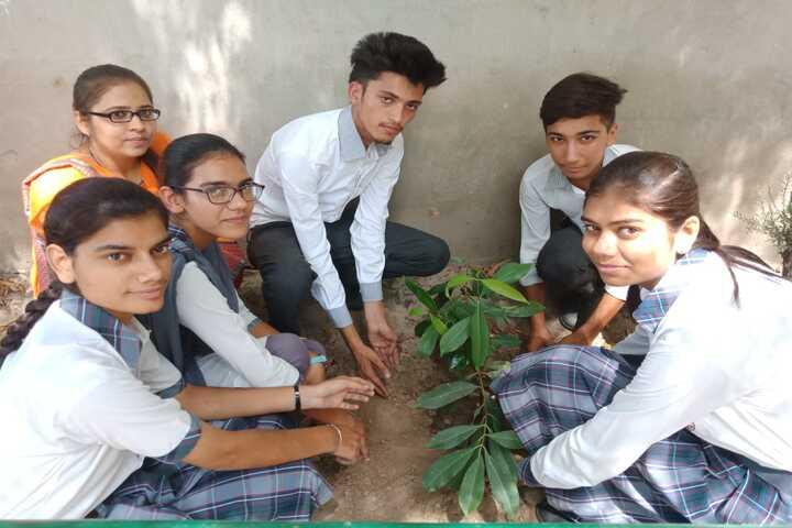 City Heart School-Tree Plant