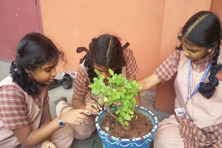 Amrita Vidyalayam-Planting