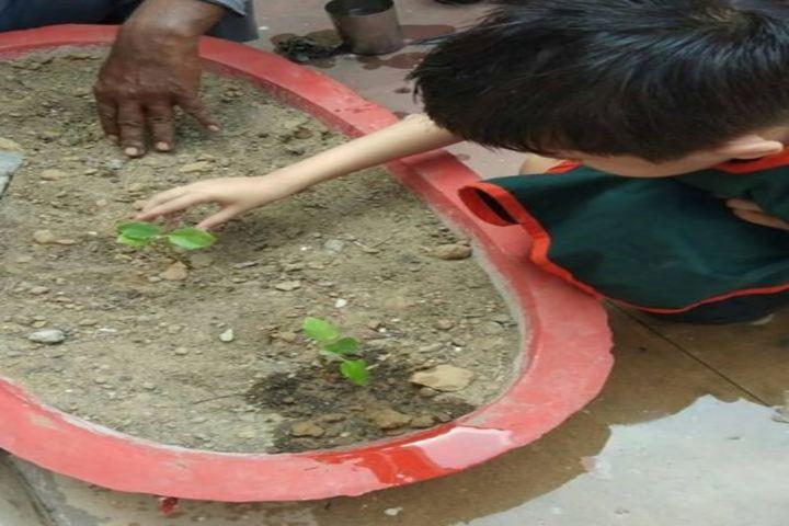 Manav Sehyog School-Tree Plant