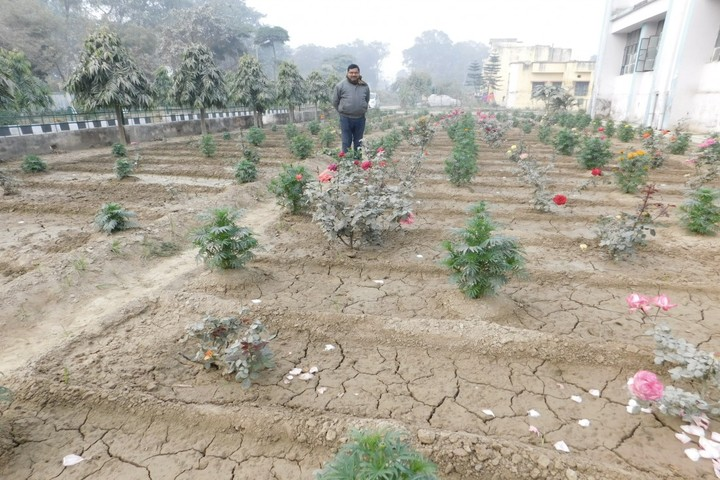 Kendriya Vidalaya No 2-Rose Garden