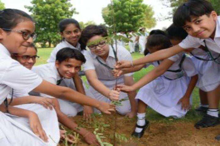 Delhi Public School Bikaner-Tree Plantation