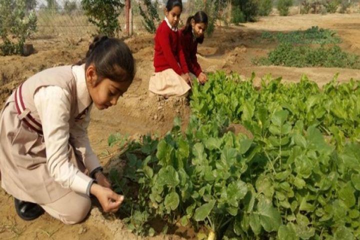 Lakshmipat Singhania Academy-Vegetable Garden