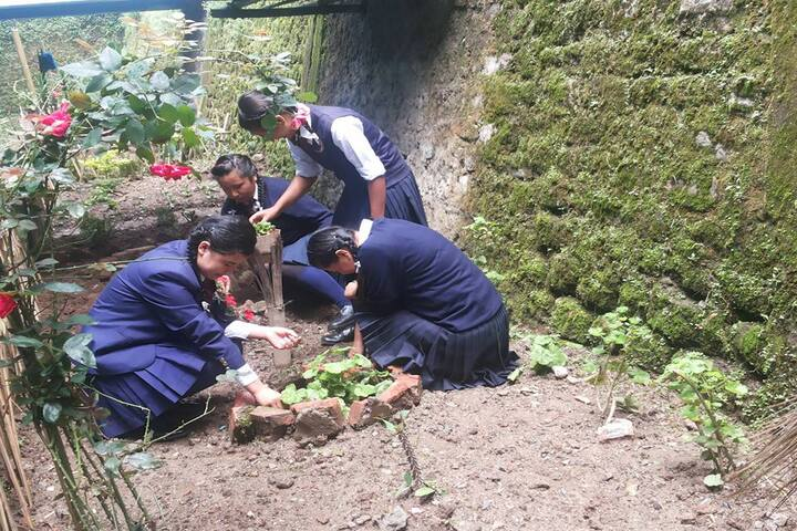 Government Secondary School-Tree Plantation