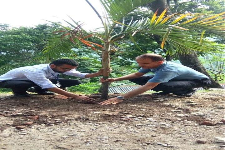 Government Secondary School-Tree Plant