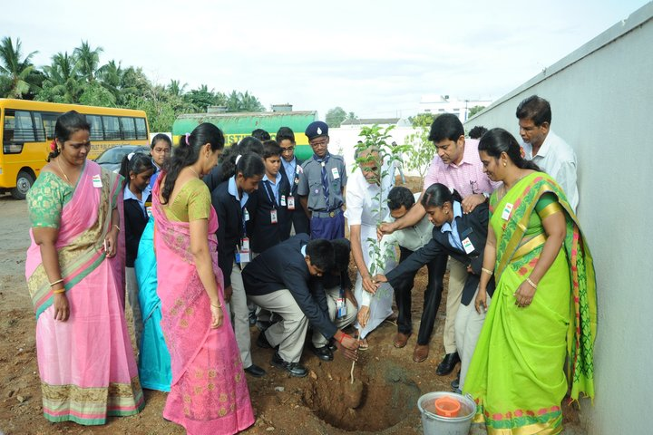 AVP Trust Public School-Tree Palntation