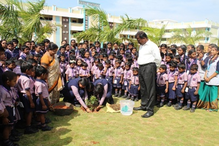 Best School-Tree Plantation