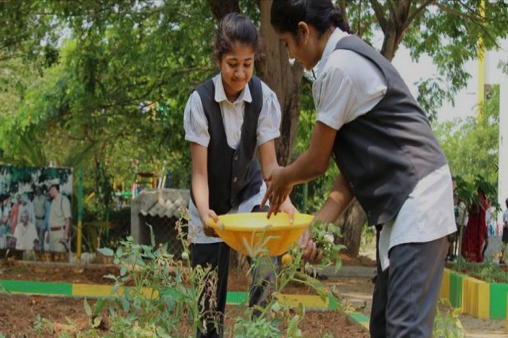 Cambridge Public E-School-Tree Plantation