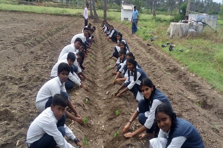 Heritage Vidhyalaya-Plantation