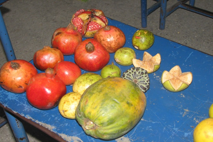 National Model Secondary School-Fruit Day