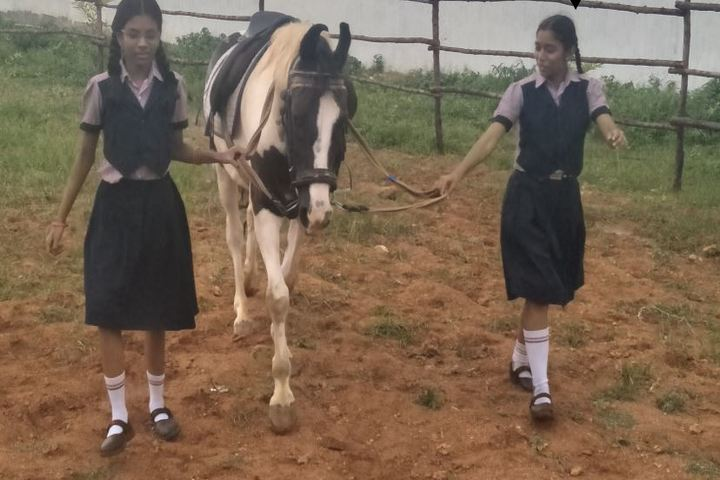 SCISM Public School-Horse Riding