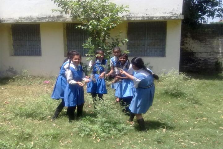Aliganj Montessori School  - Tree Plantation