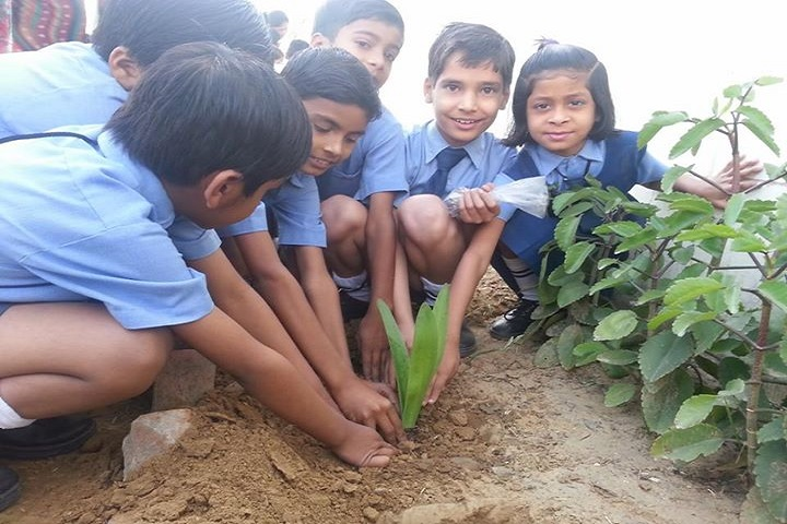 Aum Sun Public School-Tree Plantation