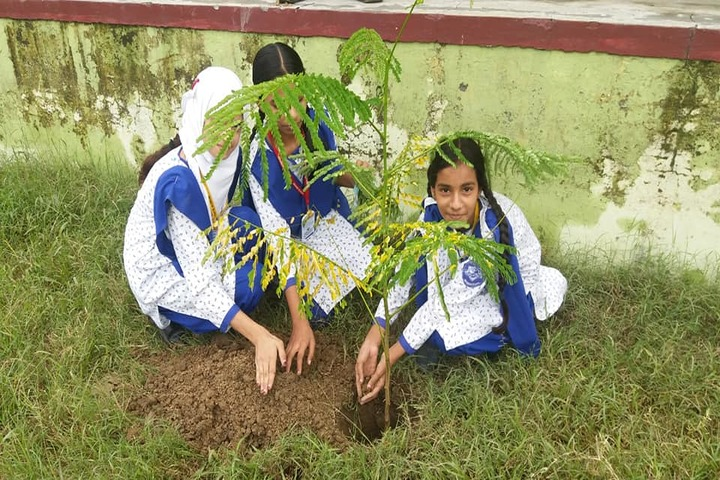 Benison School-Plantation Activity