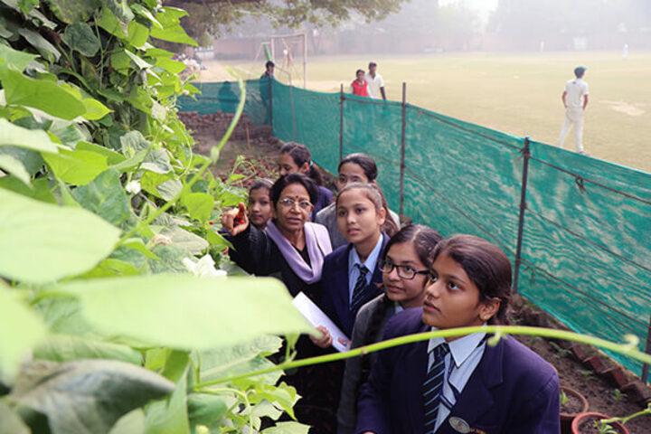 Cambridge School-The Vegetable Garden