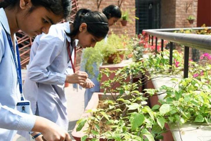 Cambridge School-Garden