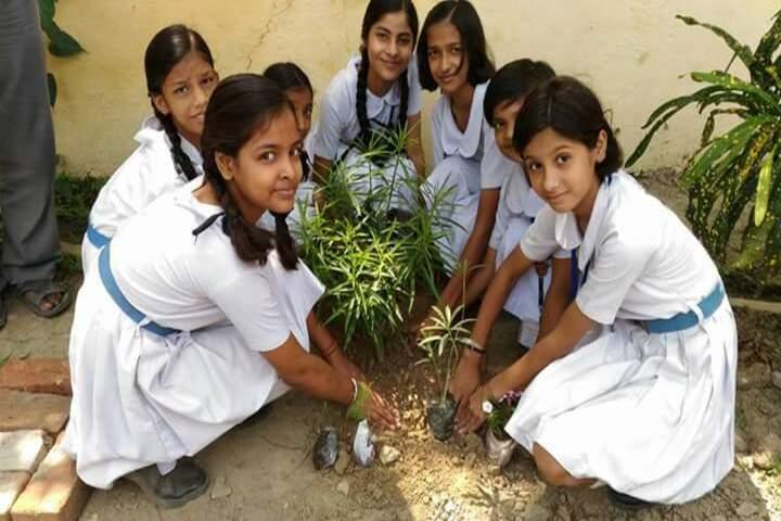 Central Hindu Girls Senior Secondary School-Plantation