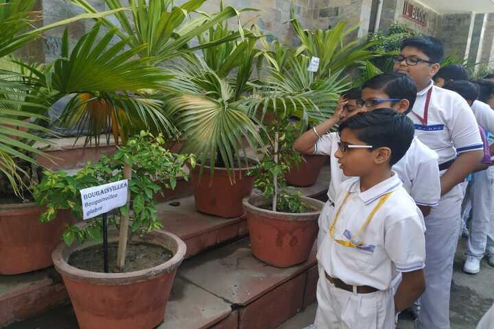 Ch Chhabil Dass Public School-Tree Plantation