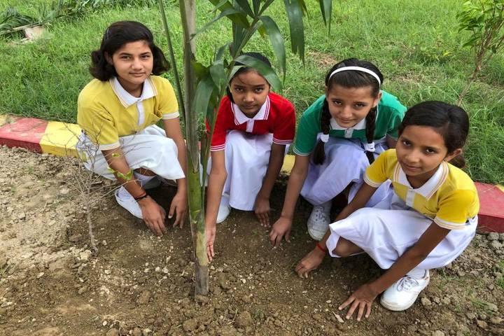 Harihar Singh Public School-Tree Plantation