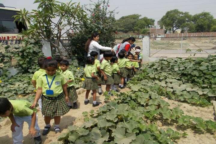 Hope Town International School-Tree-Plantation