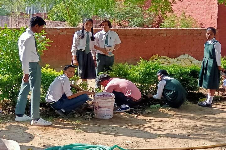 Jp-Sd International School-Tree Plantation