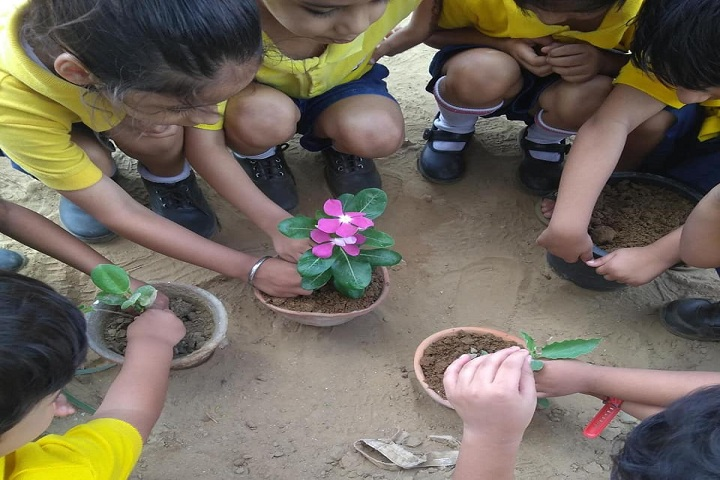 La Matina School-Tree Plantation