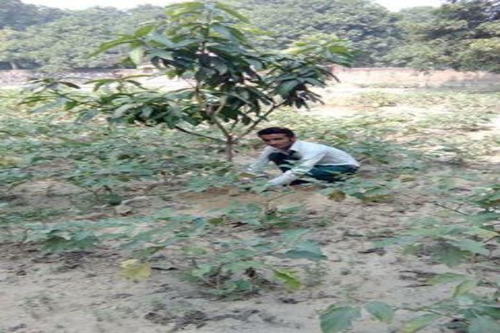 Vidyapati Public School- tree plantation