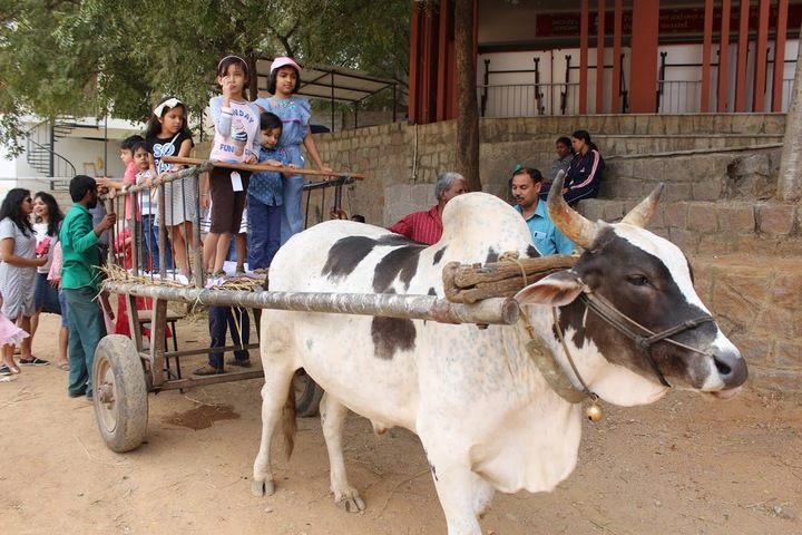 Glendale Academy - Farm Day