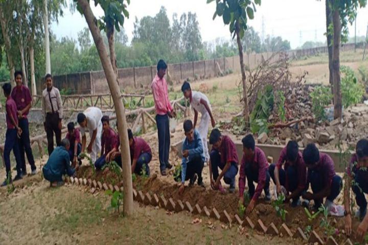St Marys Convent School-Tree Plantation