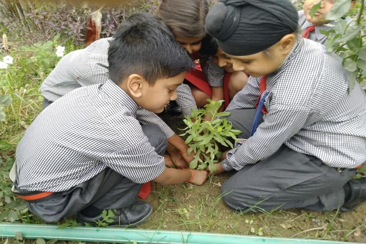 Sumitra Modern School-Plantation