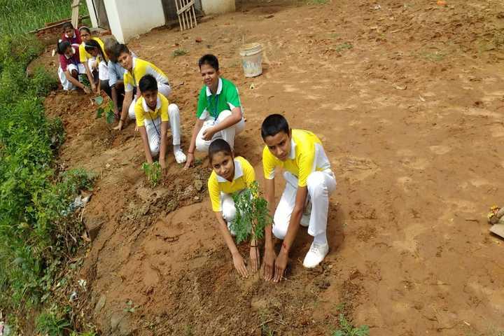 Translam Academy-Tree plantation