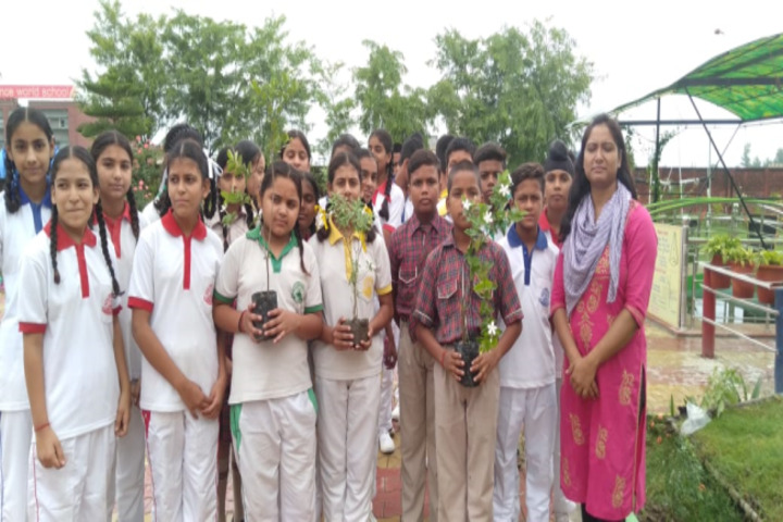 DAV Public School-Tree Plantation