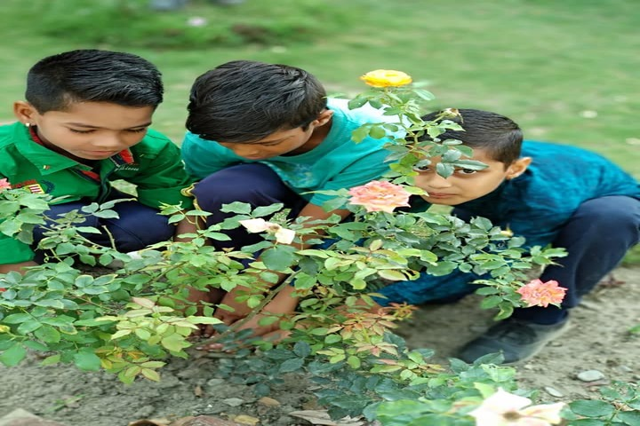Heera Kunwar Public School-Tree Plantation