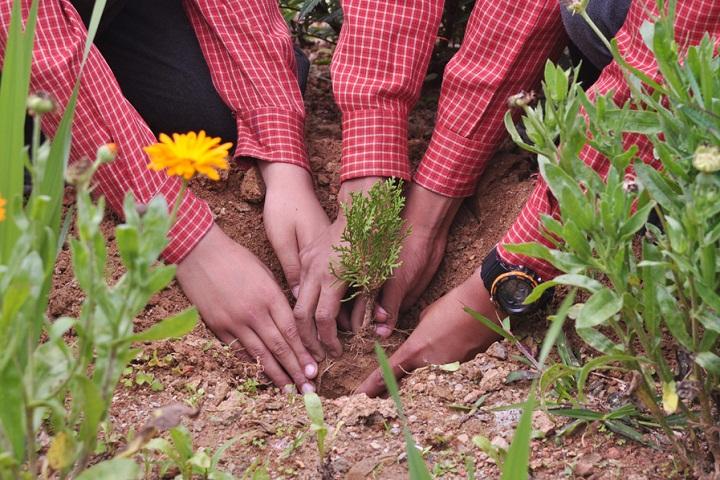 Holy Wisdom School-Tree Plantation