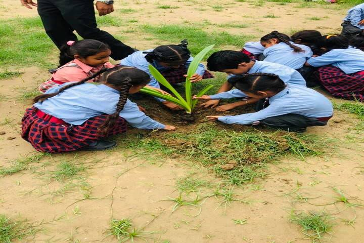 New Light School-Tree Plantation