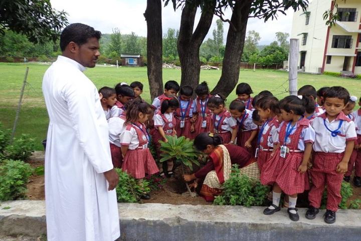St Peters School-Tree Plantation