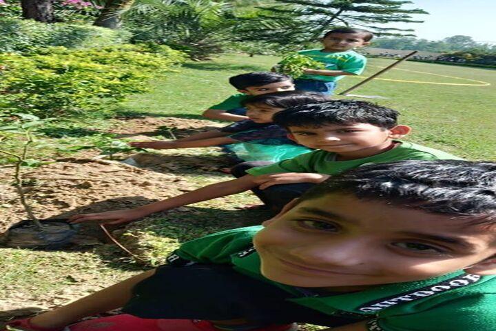 The Laureate School-Tree Plantation