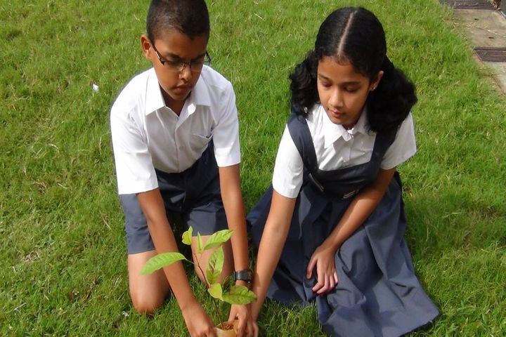 Don Bosco Senior Secondary School-Tree Plantation